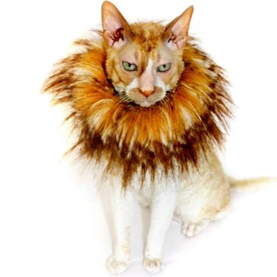 laughingsquid:  Mini Manes, Furry Lion-Like Collars For the Household Cat