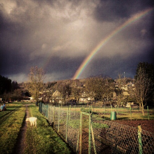#romantic #rainbow after #rain in the #field with my #dog #amazing #instalike #instathings
