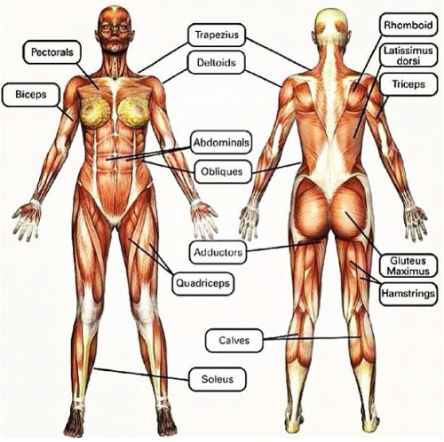 My favorit part of body to work out is the abdominals and the obliques.