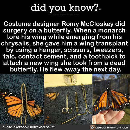 costume-designer-romy-mccloskey-did-surgery-on-a