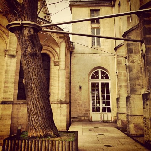 a #tree attached #paris