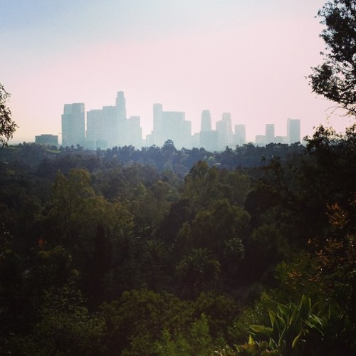 Afternoon Walk (at elysian park)