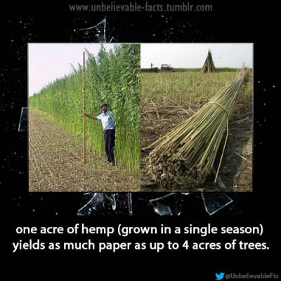 one acre of hemp (grown in a single season) yields as much paper as up to 4 acres of trees.