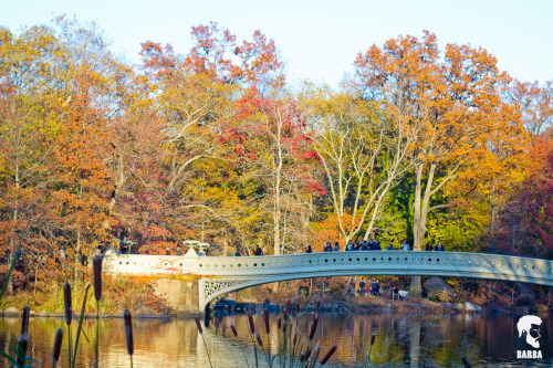 Have you ever walked through Central Park during the Fall? It's beautiful!