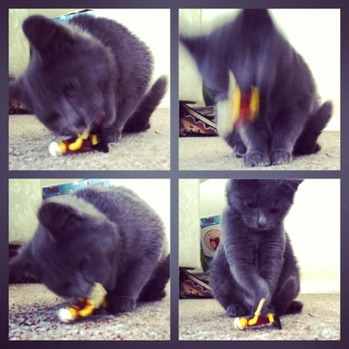 The blurry death of Caesar #evie #kitten #lego