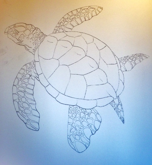 Archelon Turtle sketch in technicolor. Haha.