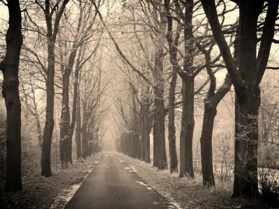 cyclepath in winter by serni on Flickr.