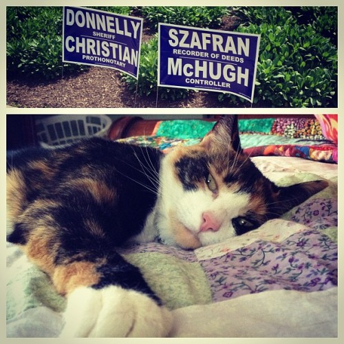 I voted in the primaries today and my sister's cat adequately shows how I feel about the lack of democrat candidates and the heat.