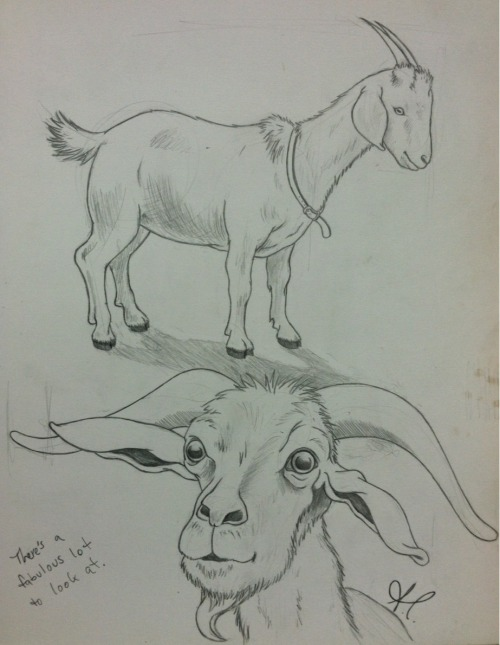 "If your catholic mother ever asks why you're drawing goats, the best answer is not, ""The devil made me do it, mama."" Turns out that my humor doesn't sit too well with her."