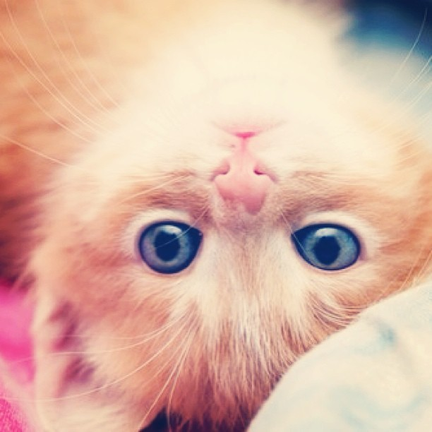 citylightslatenights:  #kitten #cute #adorable #animals #cat #eyes #photography