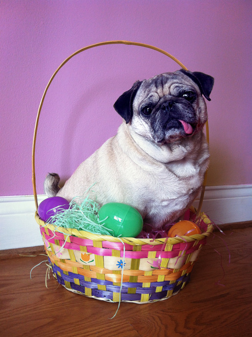 cuddlepugs:  Excuse me, Mr. Easter Bunny, I already have a Zoe.