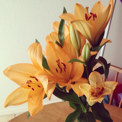 Orange Lillie's from Ryan. His gift to me because I've been stressed and sad lately.