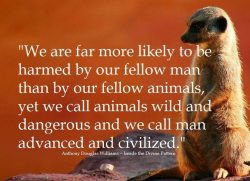 llbwwb:  PSA: by Inside the Divine Pattern. Reblog to help save Wildlife:)