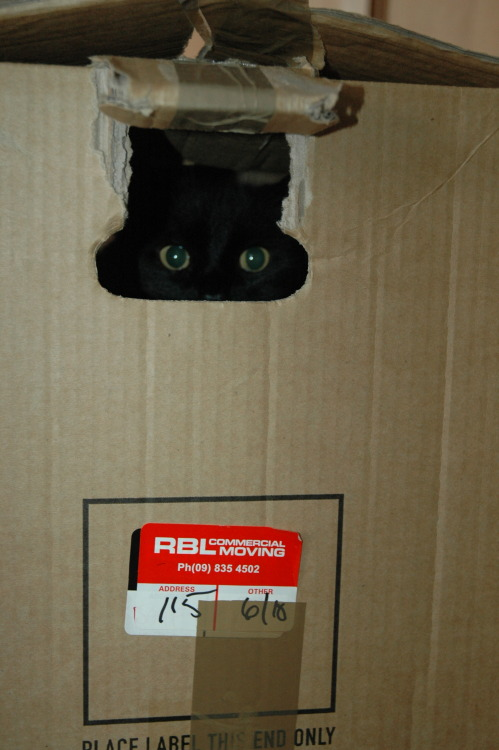 derpycats:  Frida on moving day
