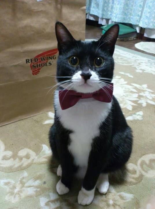 "catsbeaversandducks:  ""I have a date tonight and I'm so anxious about it I've already cried twice."" Photo via Cats"