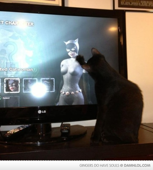 squirrellol:  How To Keep Your Cat OccupiedClick here for more funny pictures by Mr. Squirrel