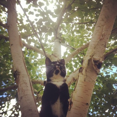 I forgot how much I missed her. #kitten #exploring #tree #oregon #tojo