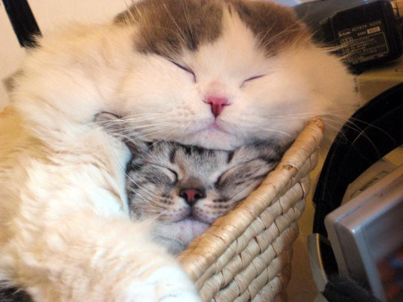 Cat Blanket & Cat Pillow Photo/caption via Catbook