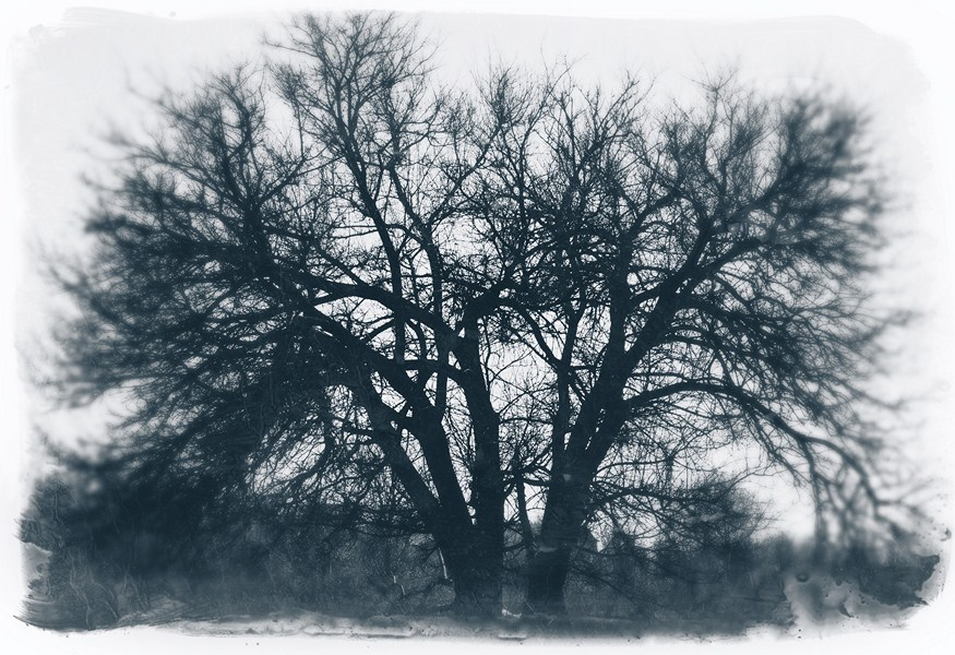 The tree under which I recently wrote down my dream.
