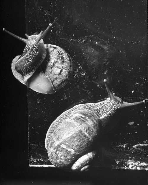 life:  LIFE magazine covered a snail-watching society? Of course they did.  (Hans Wild—Time & Life Pictures/Getty Images)  of course