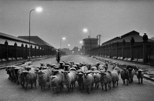 Don McCullin, Sheep to Slaughter, 1958.