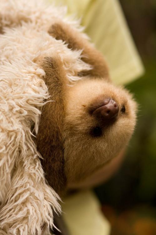 funny animals baby cute animal nature wildlife wild sloth Mammal vertical