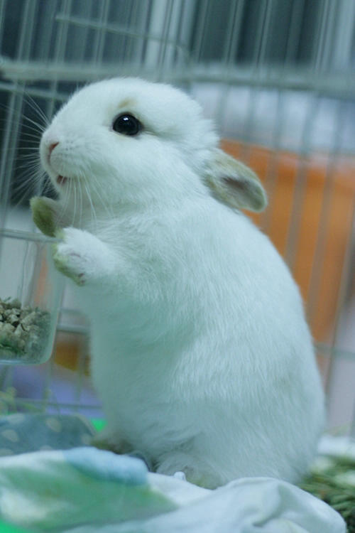 shasta-loves-bunnies: