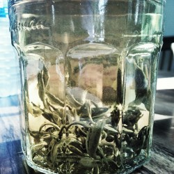 healthtayy:  🌸Flowering Jasmin tea