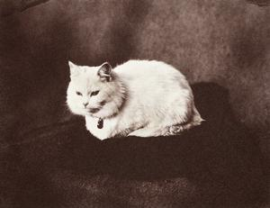 "Dear Companions: ""Snowdrop the Cat, a gift to Prince Leopold in July 1856."" (via Royal Collection)"