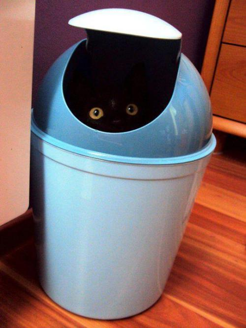 "catasters:  ""Recycle Bin is Full… Sorry!"""
