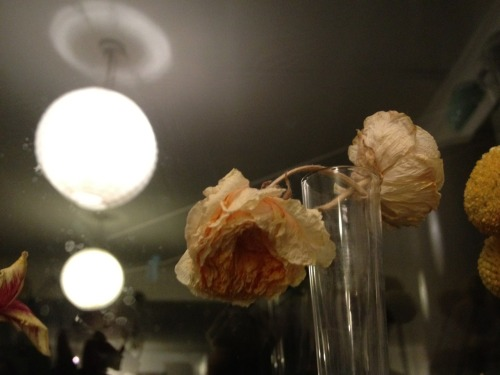 Dried flowers on my windowsill.