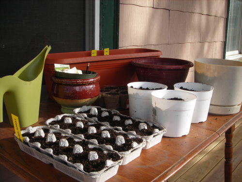 I started seeds in egg cartons for planting in May/June. Per the usual, I'm a little behind on my timing. I'm definitely going to need more soil to fill out the rest of my container garden that's not shown here.