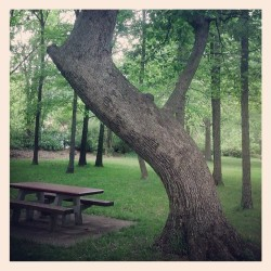 Strange tree #AHSTL  (at Effingham Rest Stop)