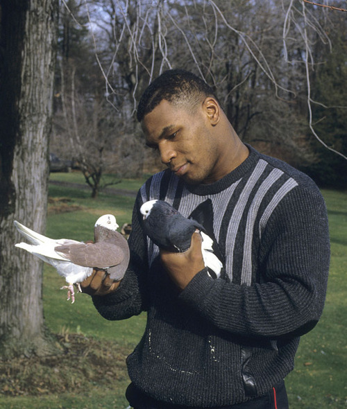 Hey, Frank Bruno is so serious about holding birds he's left no room for holding HP Sauce within his palms. His seriousness manifests itself in a stern look as he realises one of the birds has left a bum stain on his nice top. His grip tightens. Serious.
