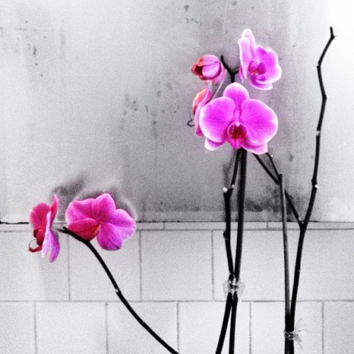 #orchid #ig #iphone #instagood #instaphoto #picoftheday #photography #edit #phuckyobathroompic