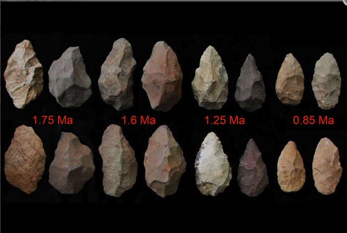 "Ancient stone tools show the pace of remarkable technological enhancements over time ""Stone Age man's gradual improvement in tool development, particularly in crafting stone handaxes, is providing insight into the likely mental advances these early humans made a million years ago. Better tools make for better hunting, and better tools come from more sophisticated thought processes. Close analysis of bits of chipped and flaked stone from across Ethiopia is helping scientists crack the code of how these early humans thought over time.Los Alamos National Laboratory Fellow Giday WoldeGabriel and a team of Ethiopian, Japanese, American and German researchers recently examined the world's oldest handaxes and other stone tools from southern Ethiopia. Their observation of improved workmanship over time indicates a distinct advance in mental capabilities of the residents in the entire region, with potential impacts in tool-development skills, and in overall spatial and navigational capabilities, all of which improved their hunting adaptation. ""Even though fossil remains of the tool makers are not commonly preserved, the handaxes clearly archive the evolution of innovation in craftsmanship, acquired intelligence and social behavior in a pre-human community over a million-year interval,"" said WoldeGabriel. The scientists determined the age of the tools based on the interlayered volcanic ashes with the handaxe-bearing sedimentary deposits in Konso, Ethiopia. Handaxes and other double-sided or bifacial tools are known as the first purposely-shaped tools made by humanity and are closely associated with Homo erectus, an ancestor of modern humans. A paper in a special series of inaugural articles in the Proceedings of the National Academy of Sciences, ""The characteristics and chronology of the earliest Acheulean at Konso, Ethiopia,"" described their work"" (read more). (Source: PhysOrg)"