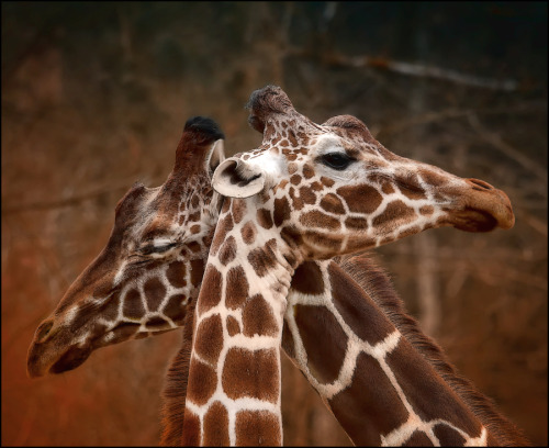 Love by Sonja Probst.