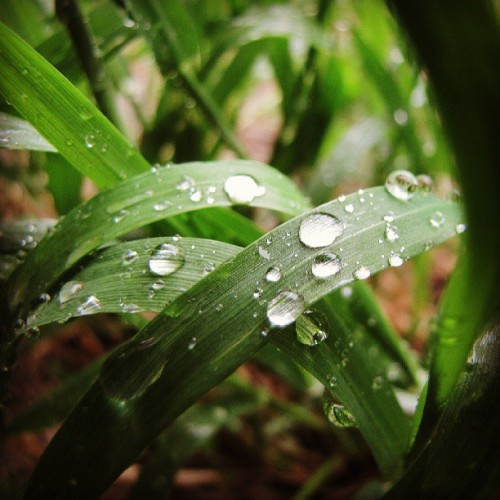Vite vite des nouvelles photos ! :3 #Water #Nature #plant #Macro #Green #Grass #Canon #Outdoor #Rain