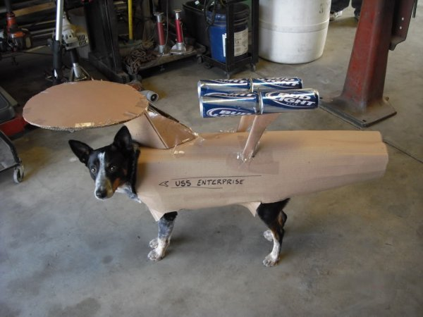 dorkly:  USS Enterprise Dog Ruining your dog's life: the final frontier.