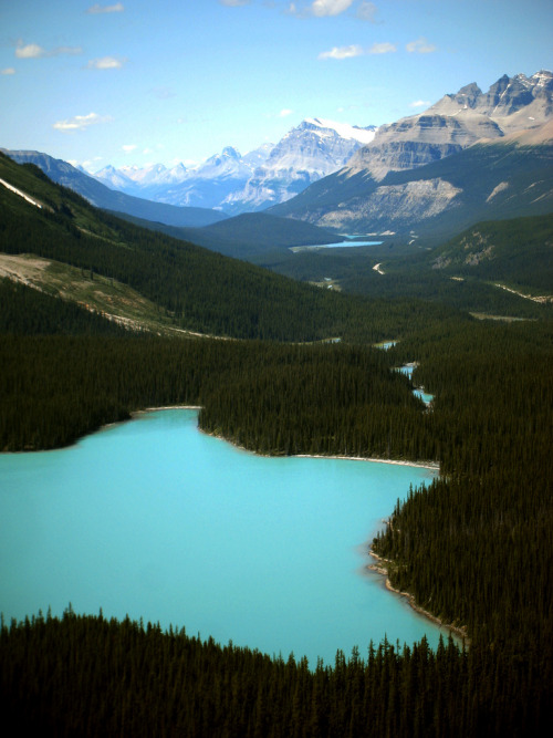 wearebarebones:  Peyto Lake (by b_vds)