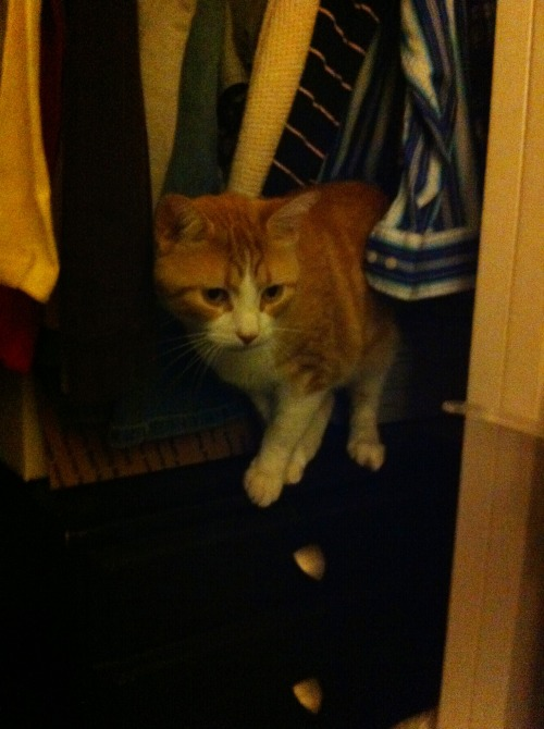 it's 2013, cat. out of the closet.