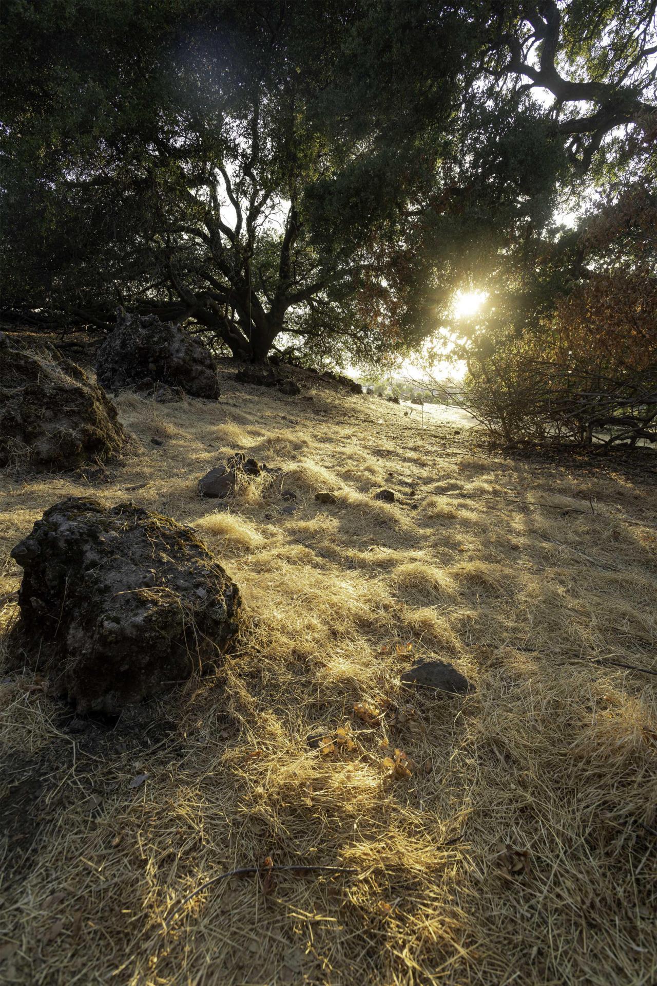 Lincoln, CA [2750x4123][OC] via /r/EarthPorn https://ift.tt/2XvGrqW #earth#landscape