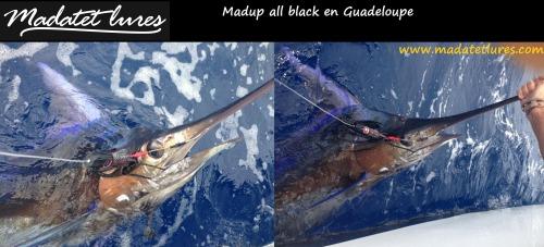 Marlin bleu pris sur Madup en Guadeloupe en tangonée latérale