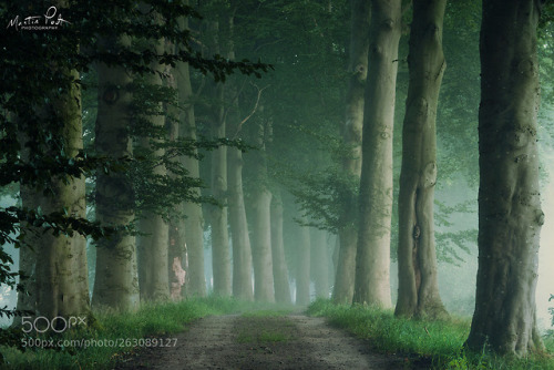 tree trunk tree boulevard woods deciduous tree forest the Netherlands WBPA Martin Podt dailyinspira