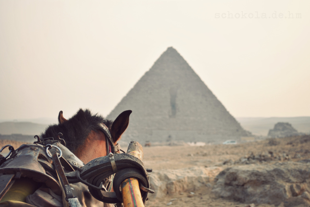 We made a carriage ride at the pyramids… Not recommended for photographers because of the vibrations…