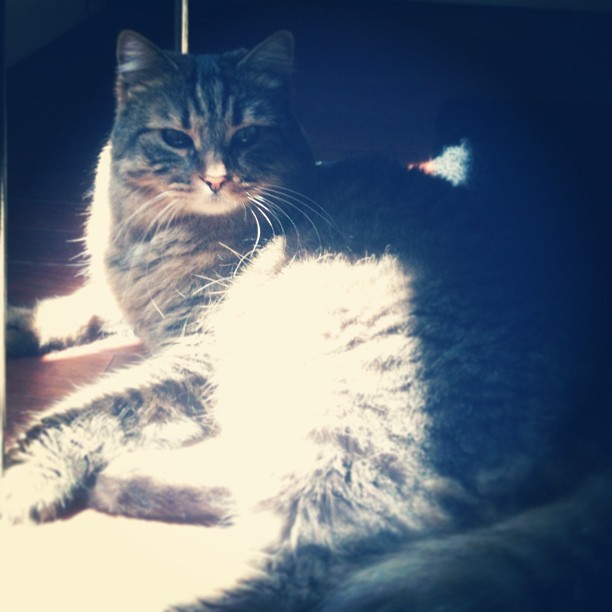 #cat #sun #spring #light #shadows