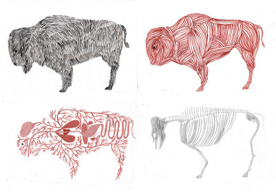 usoly: stripped buffalo by kaye blegvad on Flickr.