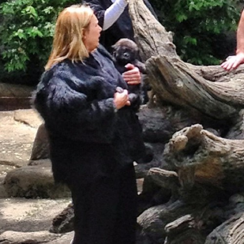 10 lb little baby gorilla… With a creepy girl in a gorilla suit