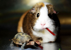 "creepicrawlies:  ""What? New HAMSTER?"" ~ Balbinka & Turtle by pyza*"