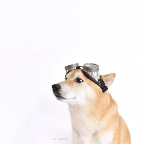 shiba shiba inu red sheeb goggles